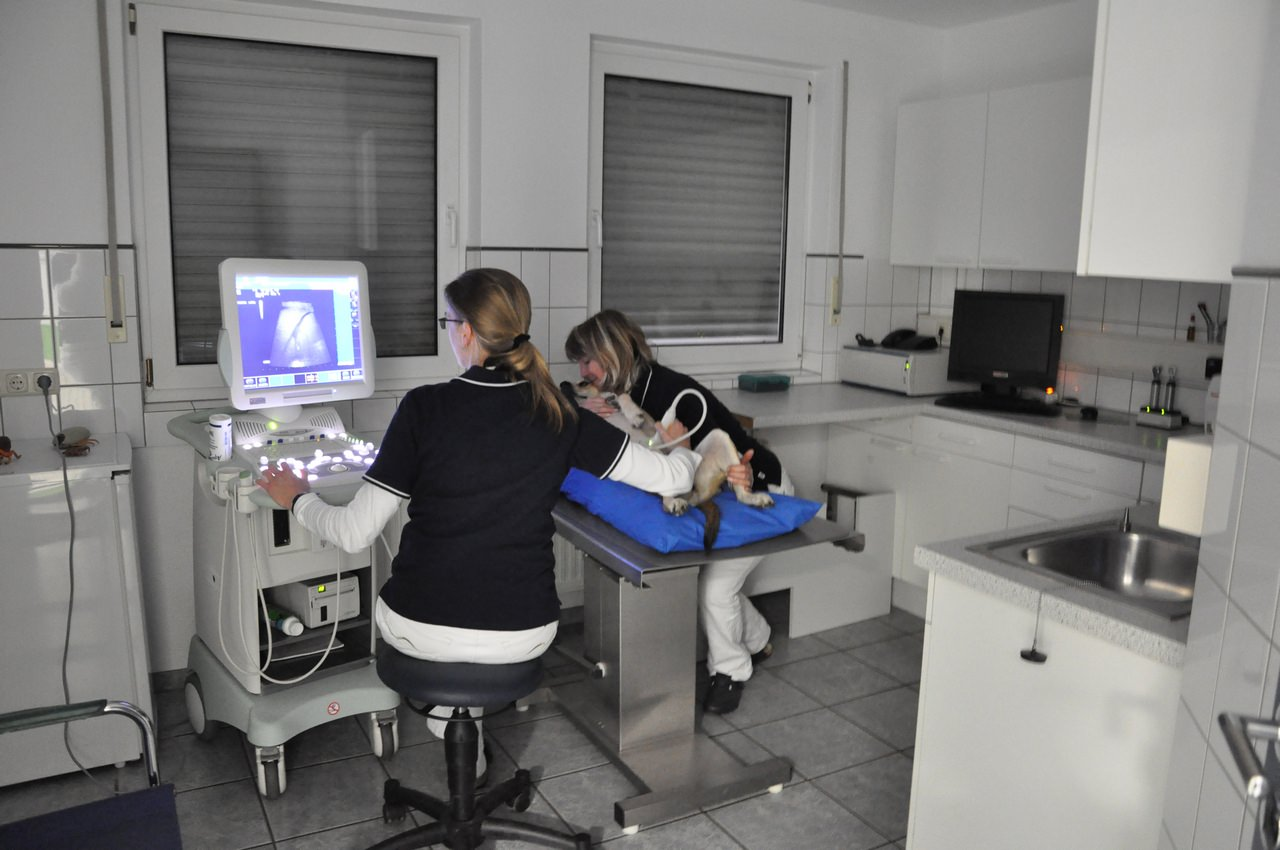 Ein Behandlungsraum in unserer Tierarztpraxis in Grevenbroich - Ultraschall und Röntgen