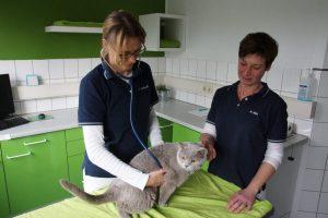 Tierärztin / Tierarzt - spezialisiert auf Katzen - Behandlungsraum
