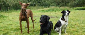 Tierarztpraxis für Hunde, Katzen und andere Kleintiere